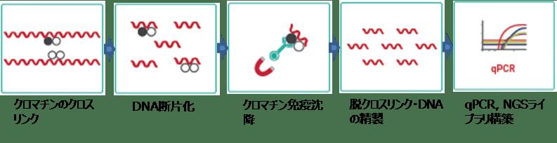 ChIP-steps