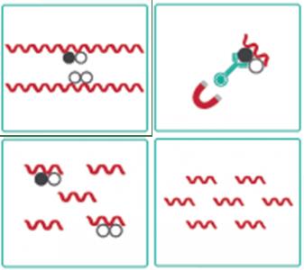 クロマチン免疫沈降|エピジェネティクス研究で使用される実験手法