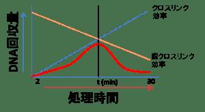 クロスリンク模式図