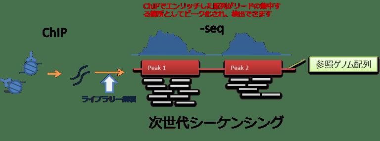 ChIP-seq 原理