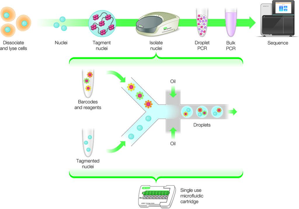 single-cell-ATAC-seq