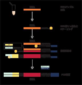 D-Plex kit プロトコルの概要